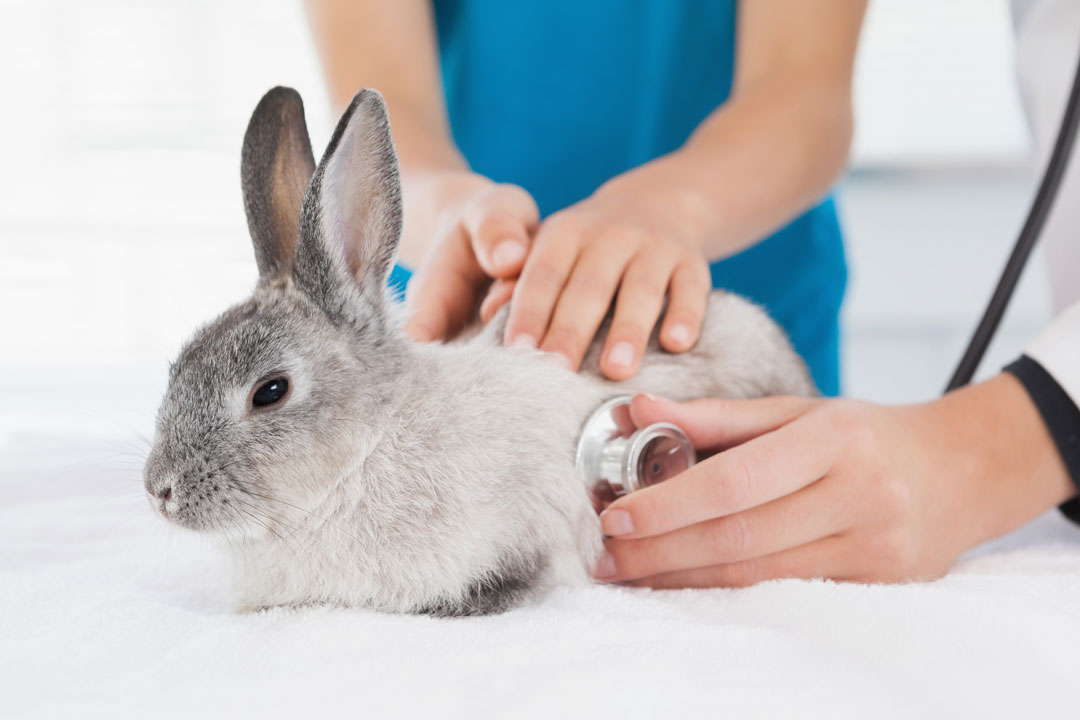 Rabbits and Small Furries – an increasingly large share of veterinary practice